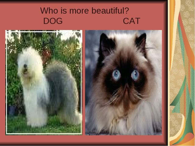 Who is more beautiful? DOG CAT