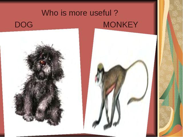 Who is more useful ? DOG MONKEY
