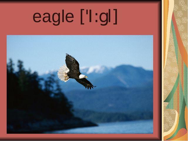 eagle ['I:gl]