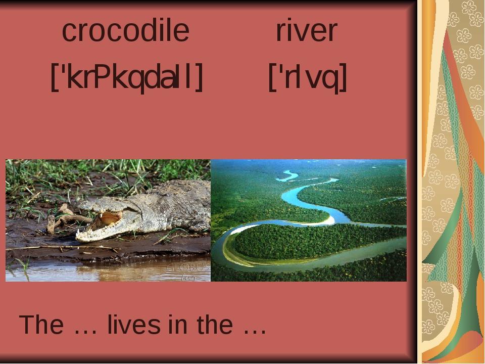crocodile ['krPkqdaIl] river ['rIvq] The … lives in the …
