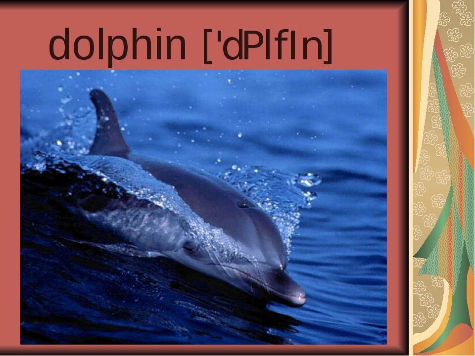dolphin ['dPlfIn]