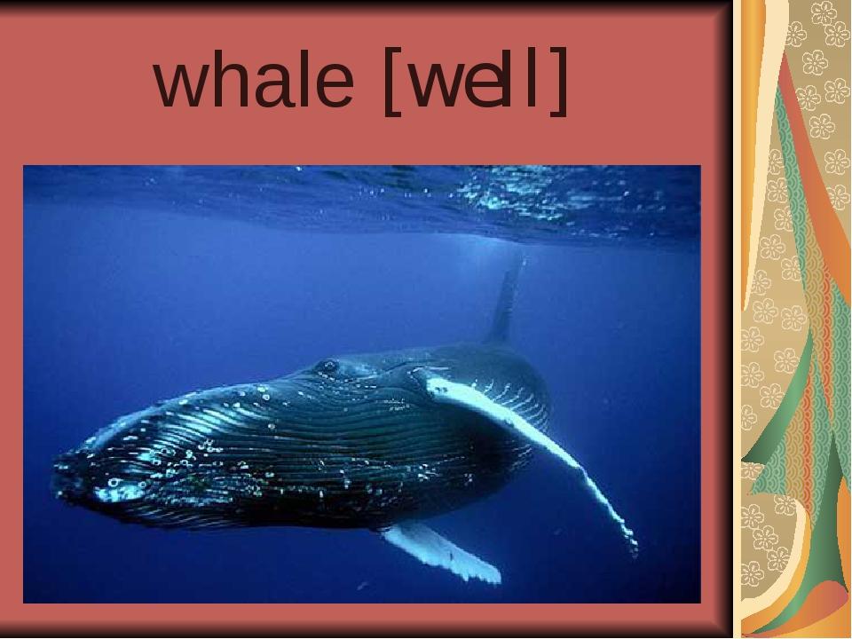 whale [weIl]