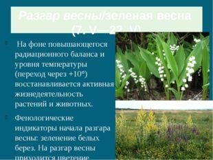 Разгар весны/зеленая весна (7. V—22. V) На фоне повышающегося радиационного