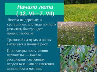 Начало лета ( 12. VI—7. VII) Листва на деревьях и кустарниках достигла полно