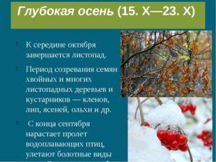 К середине октября завершается листопад. Период созревания семян хвойных и мн