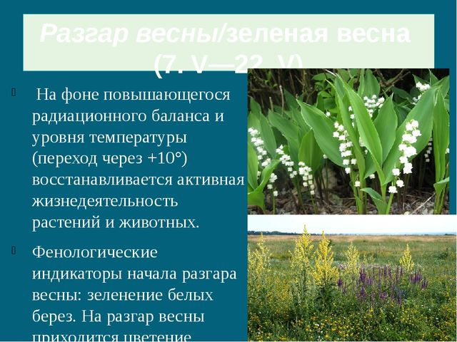 Разгар весны/зеленая весна (7. V—22. V) На фоне повышающегося радиационного...