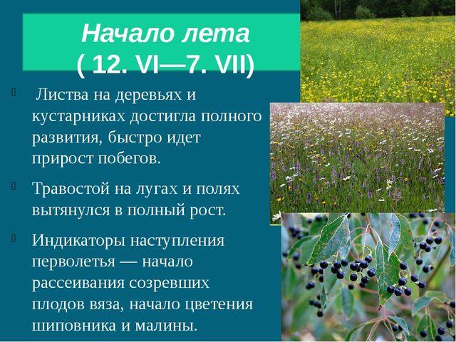Начало лета ( 12. VI—7. VII) Листва на деревьях и кустарниках достигла полно...