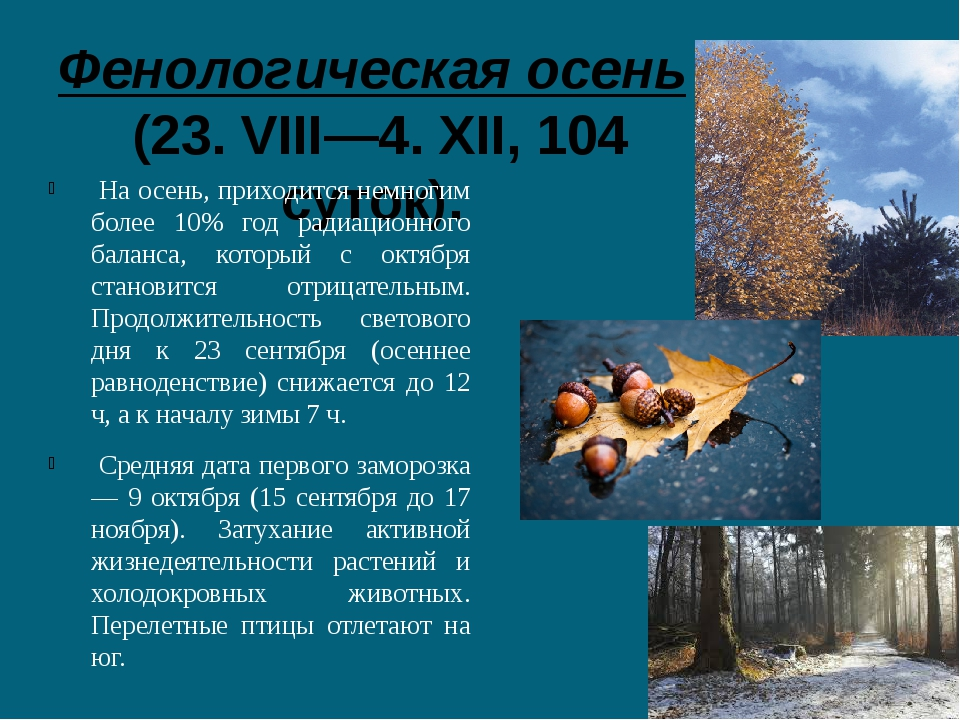 Фенологическая осень (23. VIII—4. XII, 104 суток). На осень, приходится немн...