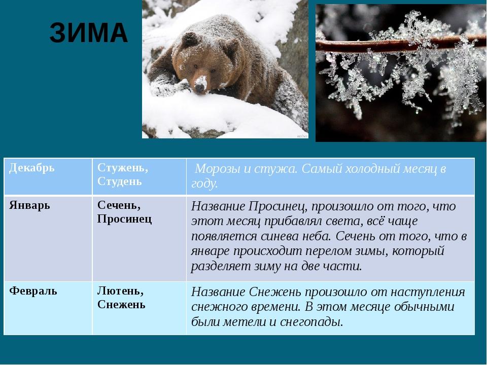 ЗИМА Декабрь Стужень, Студень Морозы и стужа. Самый холодный месяц в году. Ян...