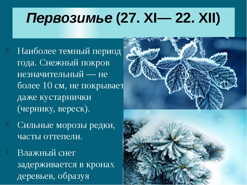 Первозимье(27. XI— 22. XII) Наиболее темный период года. Снежный покров незн...