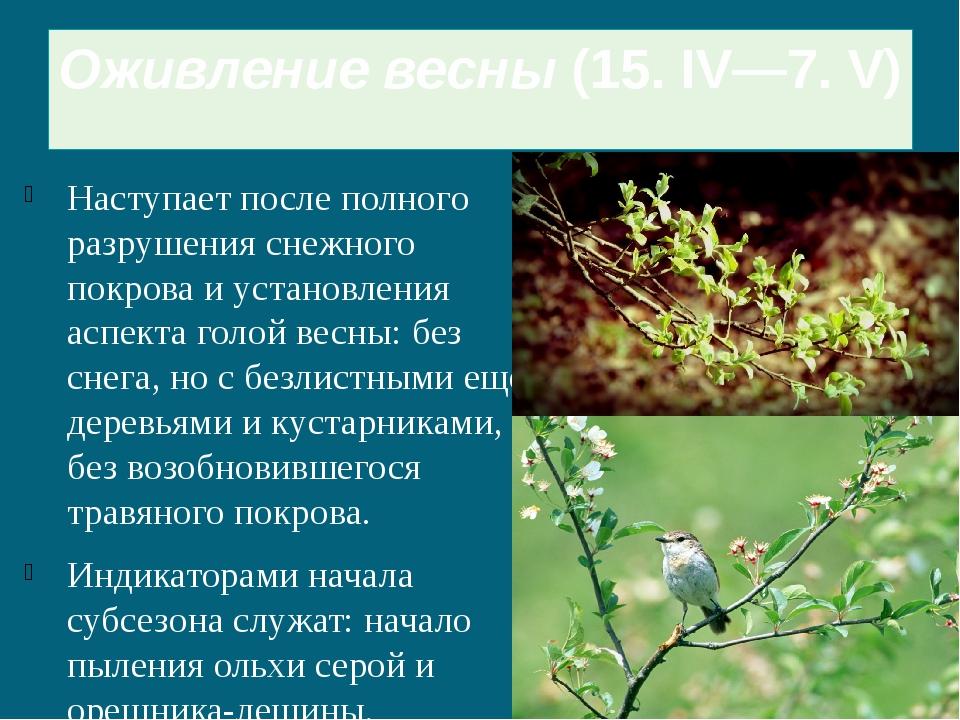 Оживление весны(15. IV—7. V) Наступает после полного разрушения снежного пок...