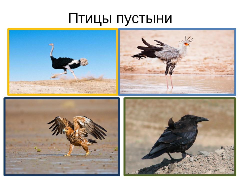 Птицы пустыни