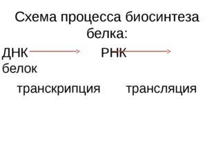 Схема процесса биосинтеза белка: ДНК РНК белок транскрипция трансляция