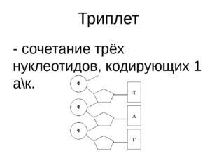 Триплет - сочетание трёх нуклеотидов, кодирующих 1 а\к.