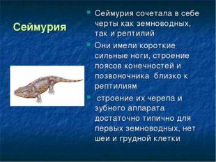 Сеймурия Сеймурия сочетала в себе черты как земноводных, так и рептилий Они и