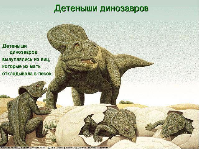 Детеныши динозавров Детеныши динозавров вылуплялись из яиц, которые их мать...