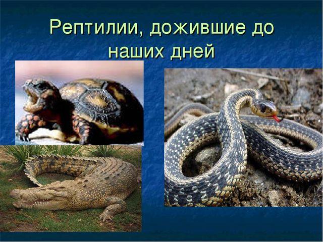 Рептилии, дожившие до наших дней