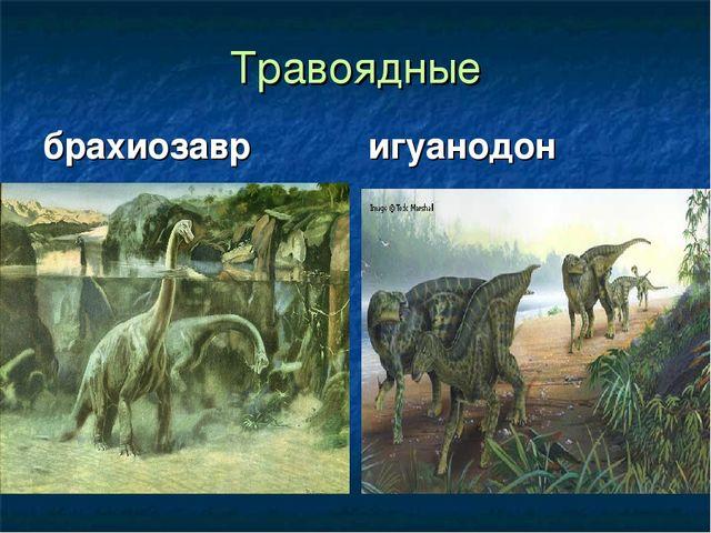 Травоядные брахиозавр игуанодон