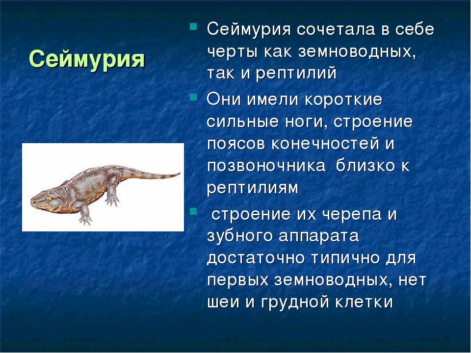 Сеймурия Сеймурия сочетала в себе черты как земноводных, так и рептилий Они и...