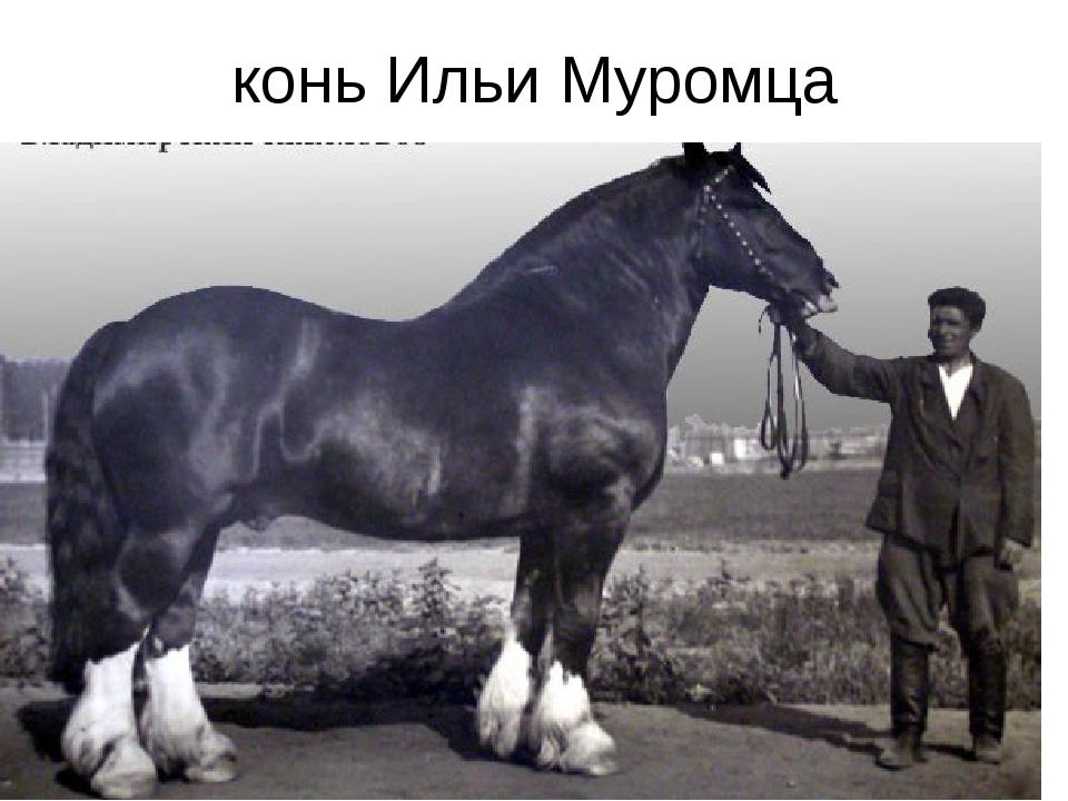 конь Ильи Муромца