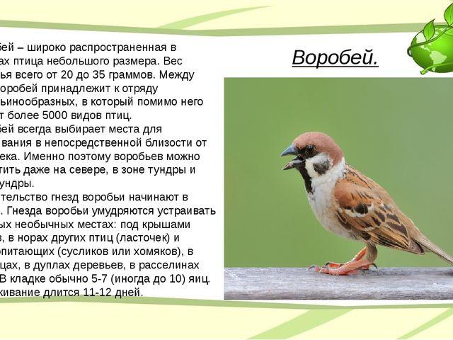 Воробей. Воробей – широко распространенная в городах птица небольшого размера...