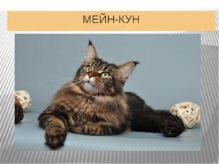 МЕЙН-КУН