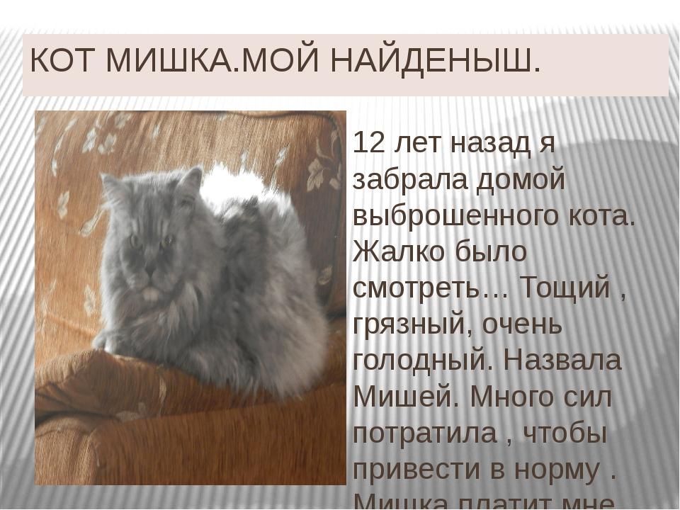 КОТ МИШКА.МОЙ НАЙДЕНЫШ. 12 лет назад я забрала домой выброшенного кота. Жалко...