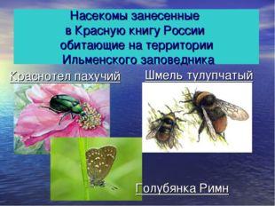 Насекомы занесенные в Красную книгу России обитающие на территории Ильменског