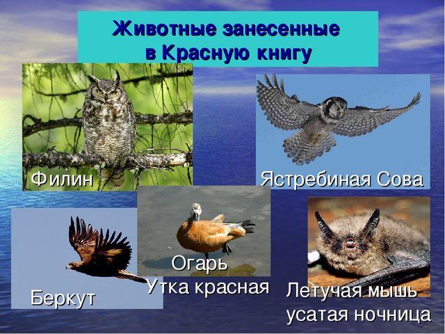 Животные занесенные в Красную книгу Ястребиная Сова Филин Летучая мышь усатая...