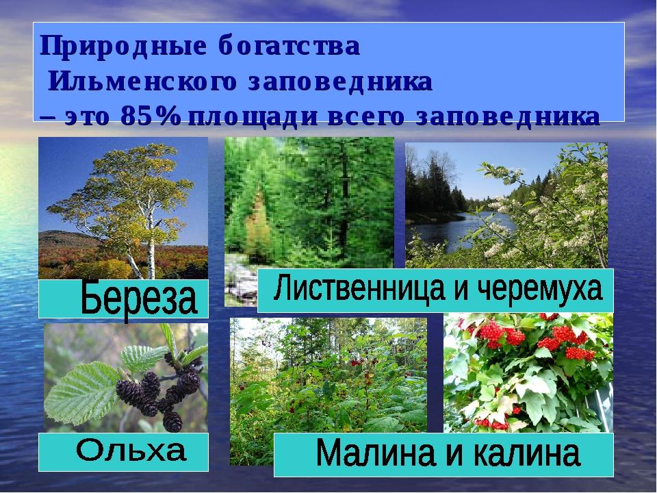 Природные богатства Ильменского заповедника – это 85% площади всего заповедника