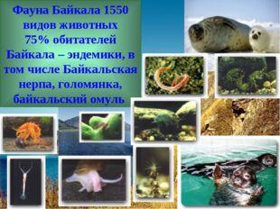 Фауна Байкала 1550 видов животных 75% обитателей Байкала – эндемики, в том чи