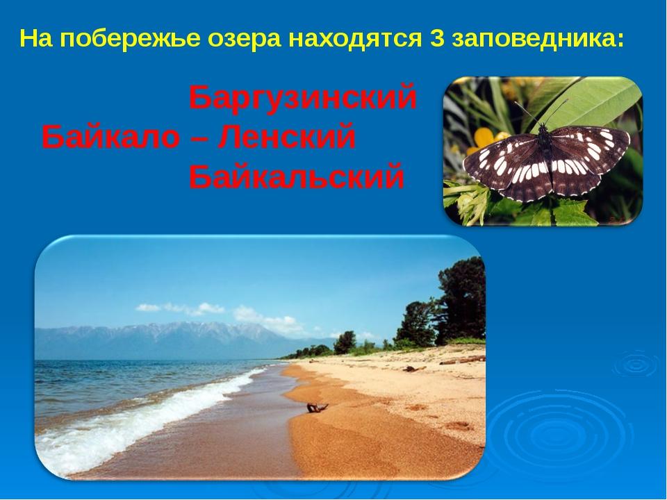 На побережье озера находятся 3 заповедника: Баргузинский Байкало – Ленский Ба...