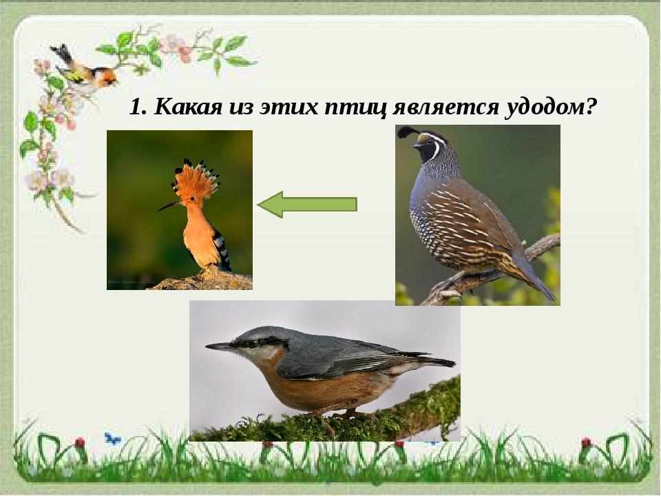 1. Какая из этих птиц является удодом?