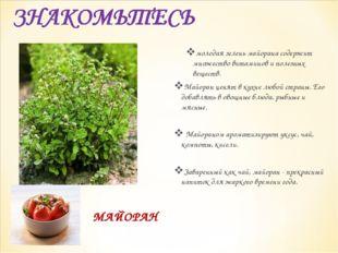 МАЙОРАН молодая зелень майорана содержит множество витаминов и полезных вещес