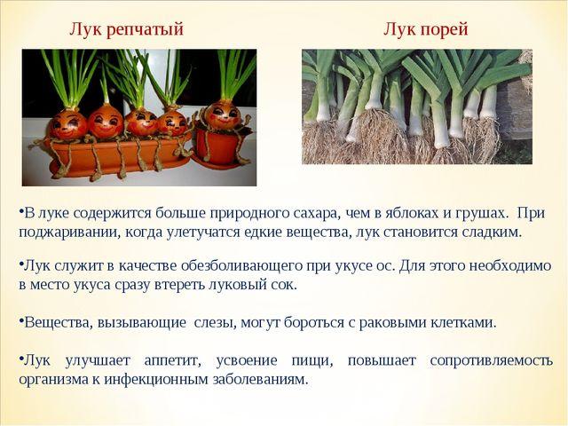 В луке содержится больше природного сахара, чем в яблоках и грушах. При подж...