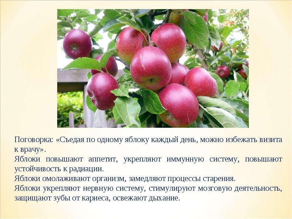 Поговорка: «Съедая по одному яблоку каждый день, можно избежать визита к врач...