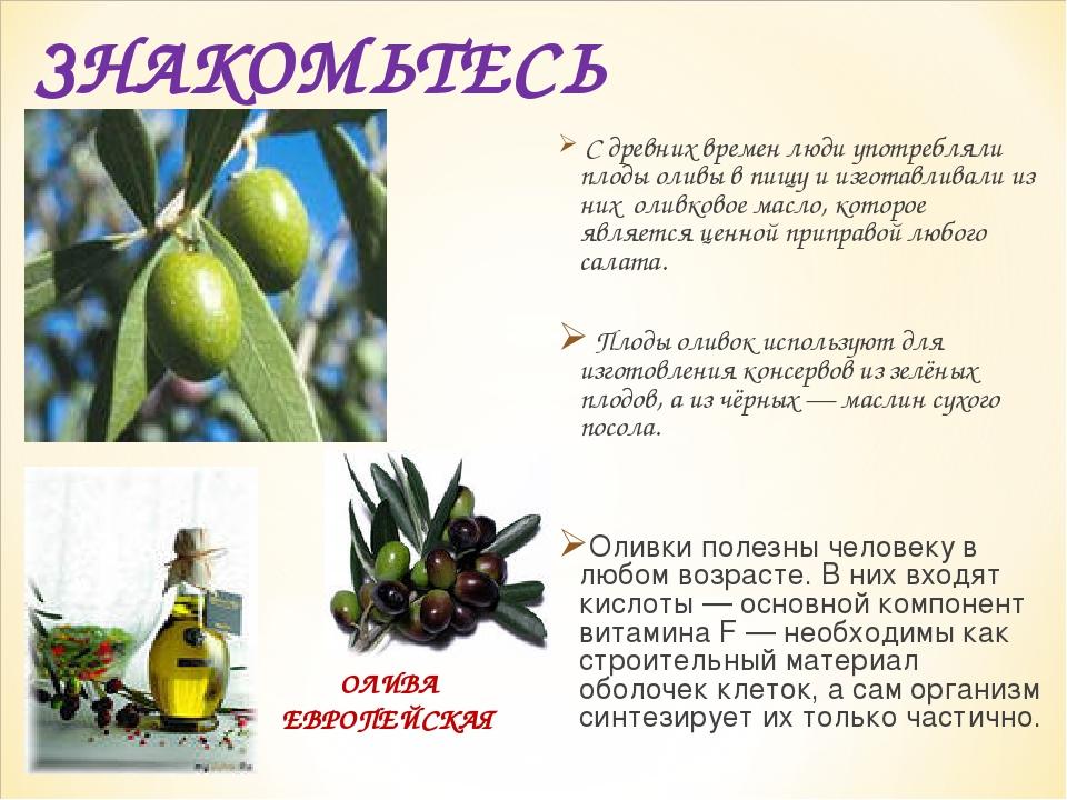 ЗНАКОМЬТЕСЬ С древних времен люди употребляли плоды оливы в пищу и изготавлив...