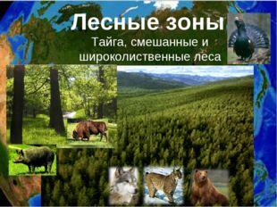 Лесные зоны: Тайга, смешанные и широколиственные леса
