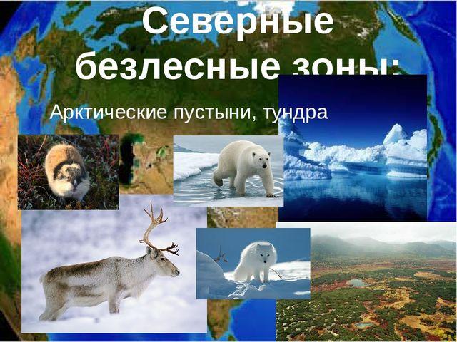 Северные безлесные зоны: Арктические пустыни, тундра