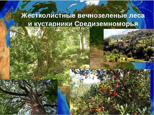 Жестколистные вечнозеленые леса и кустарники Средиземноморья