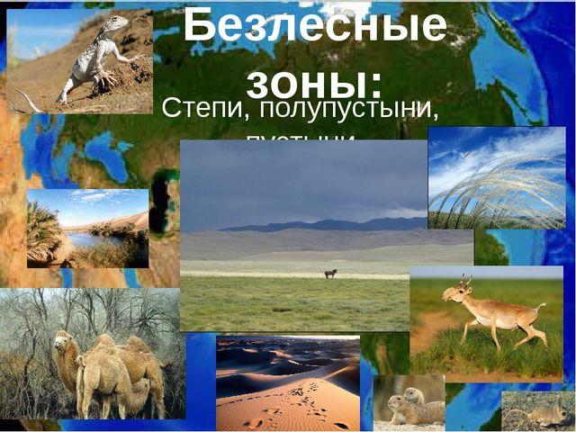Степи, полупустыни, пустыни Безлесные зоны: