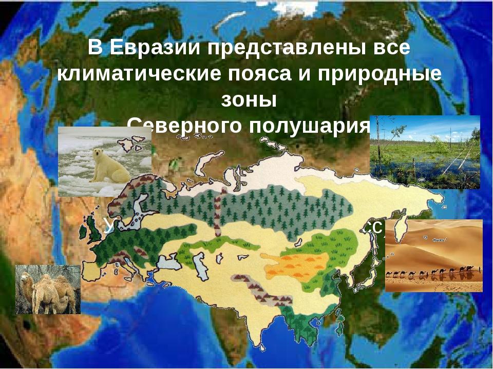 В Евразии представлены все климатические пояса и природные зоны Северного пол...