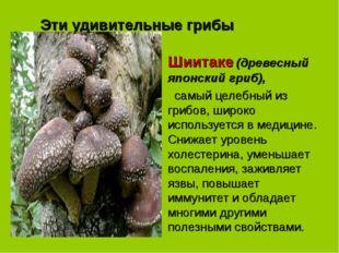 Эти удивительные грибы Шиитаке (древесный японский гриб),  самый целебный из