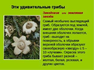 Эти удивительные грибы Звездовик или земляная звезда Самый необычно выглядящи