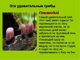 Эти удивительные грибы Плазмодий Самый удивительный гриб. Этот гриб умеет ход