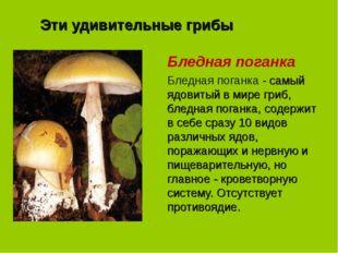 Эти удивительные грибы Бледная поганка Бледная поганка - самый ядовитый в мир
