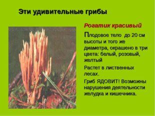 Эти удивительные грибы Рогатик красивый Плодовое тело до 20 см высоты и того