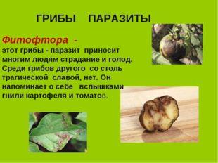 ГРИБЫ ПАРАЗИТЫ Фитофтора - этот грибы - паразит приносит многим людям страдан