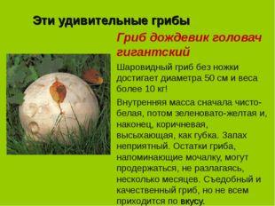 Эти удивительные грибы Гриб дождевик головач гигантский Шаровидный гриб без н