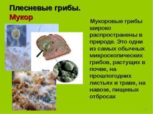 * Плесневые грибы. Мукор Мукоровые грибы широко распространены в природе. Это